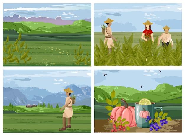 Set of organic tea harvesting process