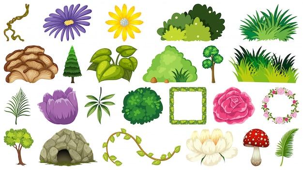 Set of ornamental plant