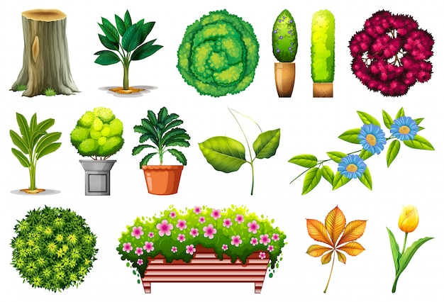 Set of ornamental plants