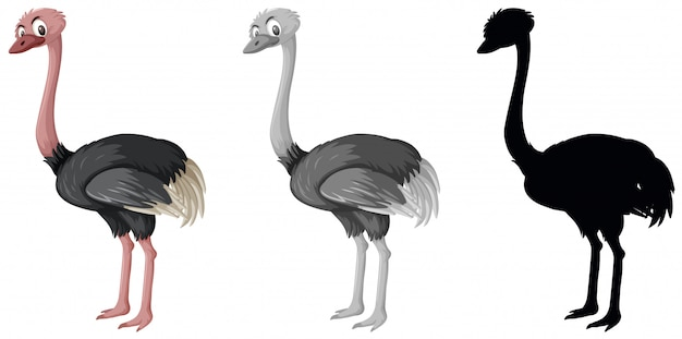 Set of ostrich character