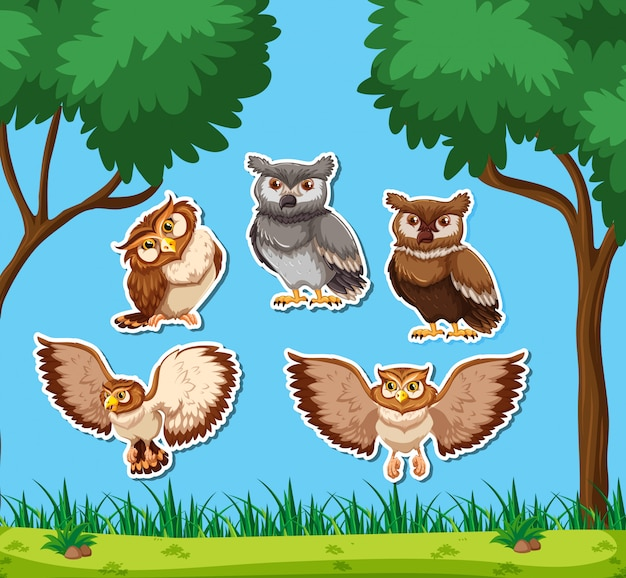 Set of owl sticker
