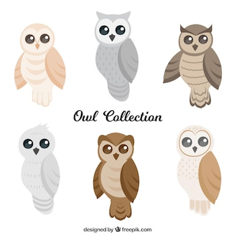 Set of owls in flat design