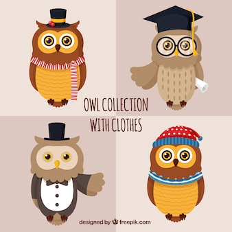 Set of owls with accessories