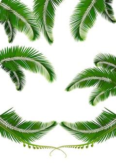Set of palm leaves.