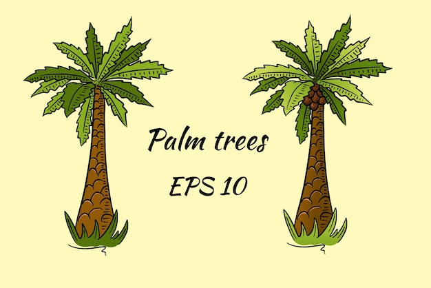 Set of palm trees in cartoon style. two palms, one with coconuts, the other without.