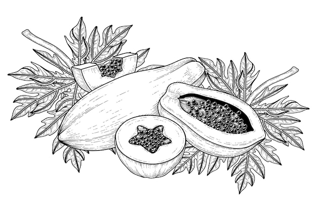 Set of papaya fruit hand drawn elements botanical illustration