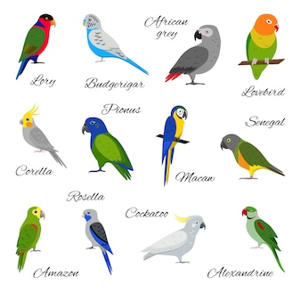 Set of parrot icons