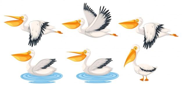 Set of pelican character