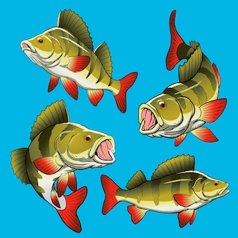 Set of perch fish for gamefish bundle collection
