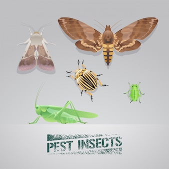 Set of pest insects realistic illustration