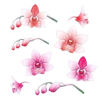 Set Phalaenopsis orchid