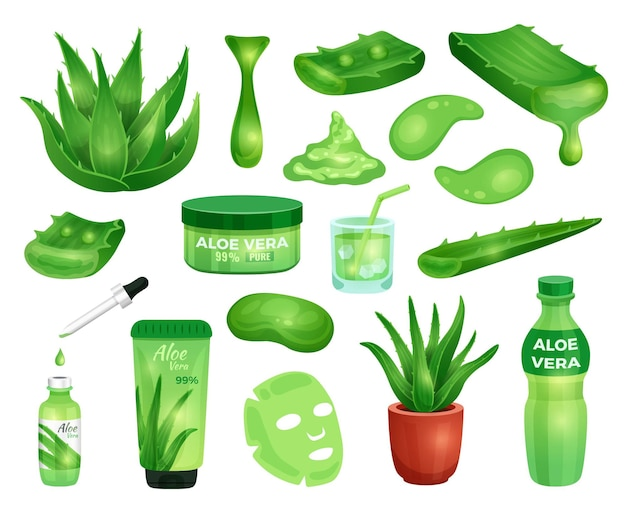 Set of pharmacy succulent aloe vera plant leaves and elements for cosmetic products