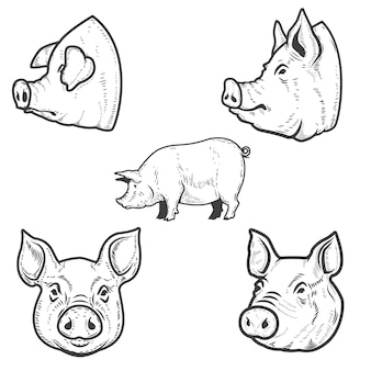 Set of pig illustrations. pork head.  element for emblem, sign, poster, badge.  illustration