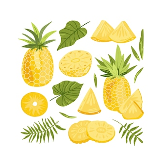 Set of pineapple whole and slices illustration vector