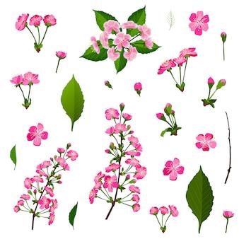Set of pink cherry tree flowers