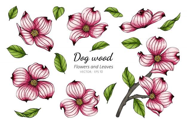 Set of pink dogwood flower and leaf drawing illustration