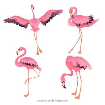 Set di fenicotteri rosa in mano disegnato stile