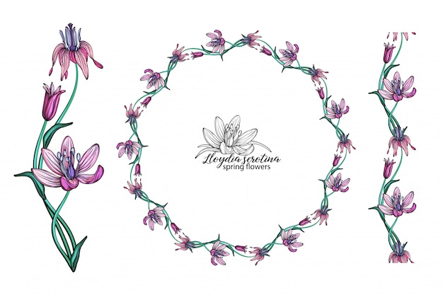 Set of pink flowers. wreath. bouquet. spring flowers