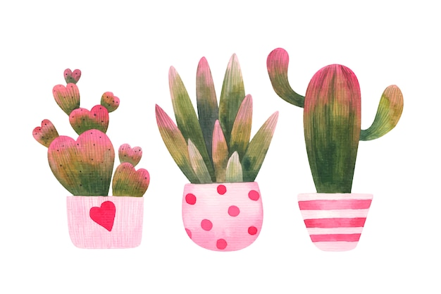 Set of pink-green cacti in ornamental flower pot illustration on a white background