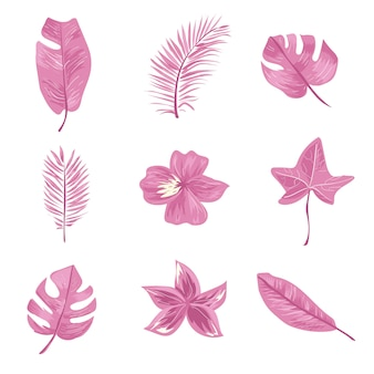 Set of pink tropical leaf and flower.