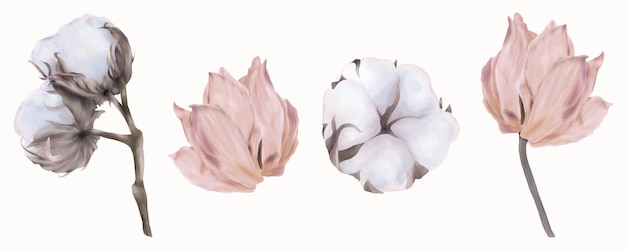 Set of pink tulips and cotton