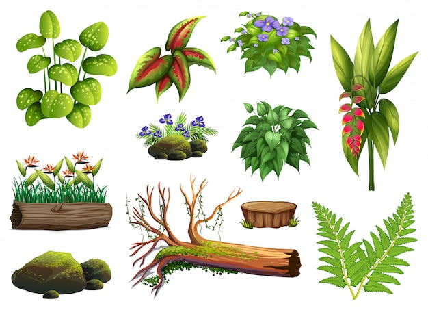 A set of plant element