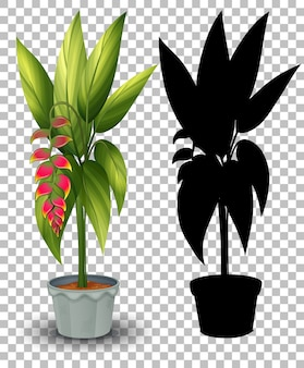 Set of plant in pot on transparent