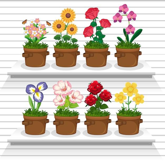 Set di piante sugli scaffali