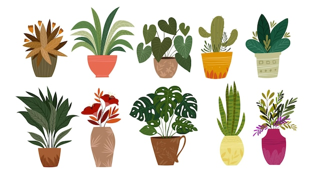 Set of plants in pot vector illustration houseplants for interior home or office decoration