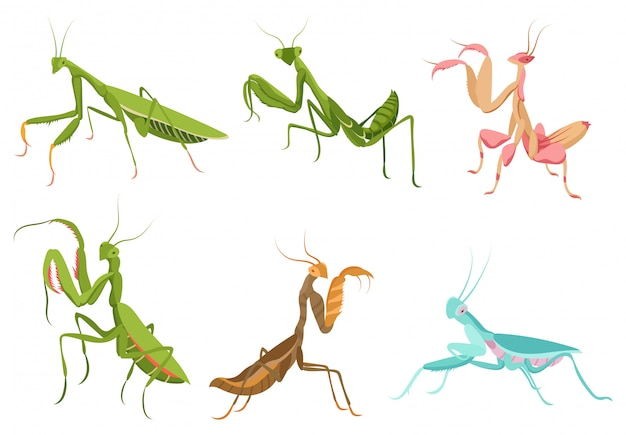 Set of praying mantis. сollection of colorful mantis in various poses.