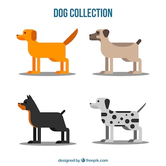 Set of profile dogs in flat design
