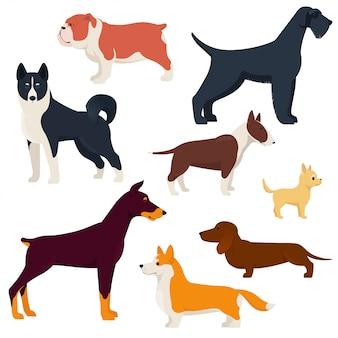 Set of purebred dog breeds.    illustration
