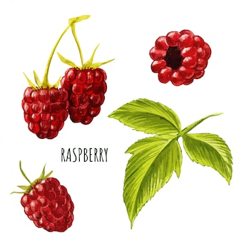 Set of raspberries and leaves, hand drawn