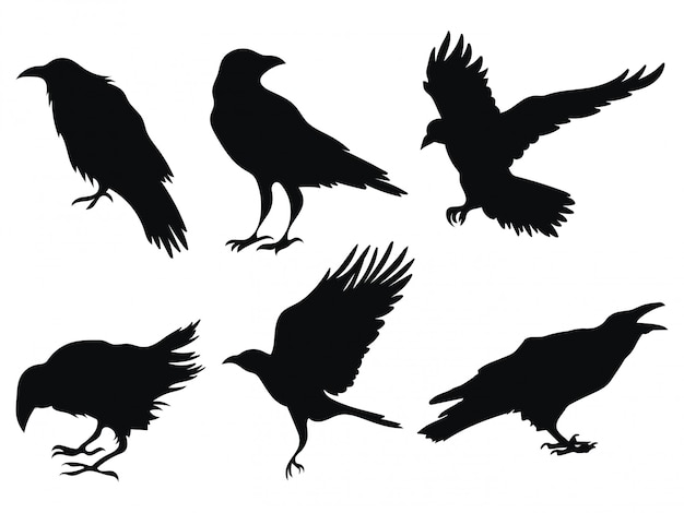Set of ravens. a collection of black crows. silhouette of a flying crow.