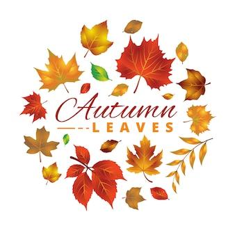 Set of realistic autumn/fall leaves