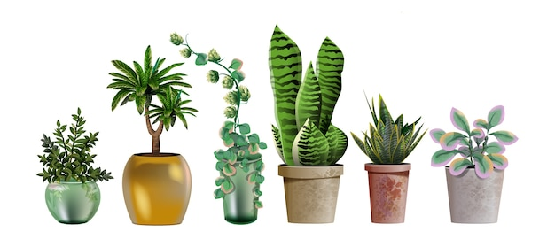 Set of realistic detailed house or office plant for interior design and decoration.tropical and mediterranean plant for interior decor of home or office.