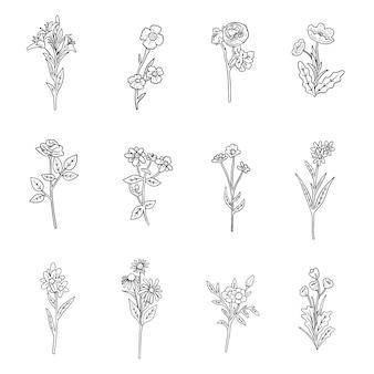 Set di erbe disegnate a mano realistiche e fiori selvatici