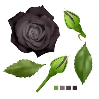Set of realistic monochromatic roses