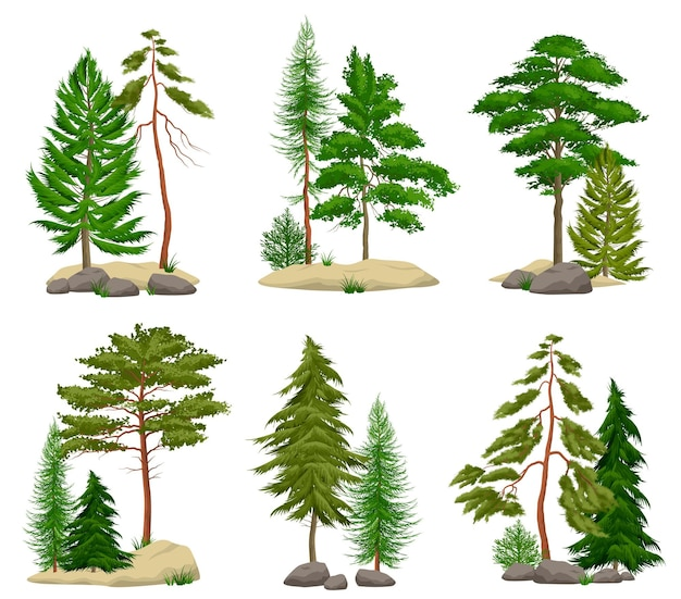 Set of realistic pine forest elements with conifer trees soil and boulders isolated