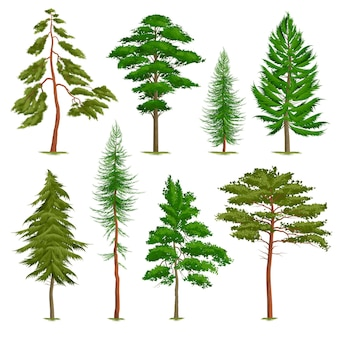 Set of realistic pine trees of various type isolated on white