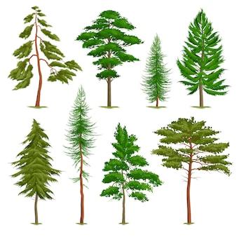Insieme dei pini realistici di vario tipo isolati su bianco