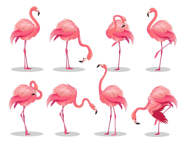 Set of realistic pink flamingos. exotic bird in different poses