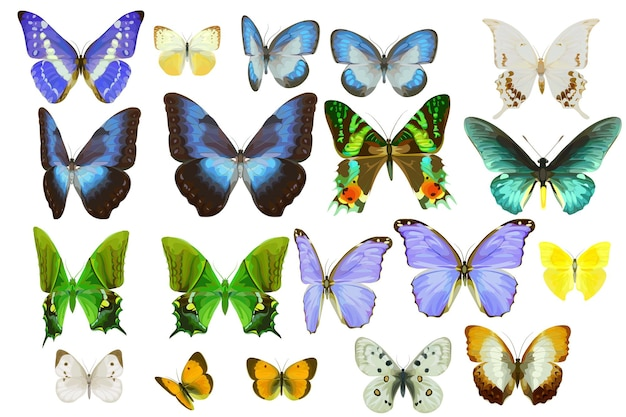 Set of realistic tropical butterflies
