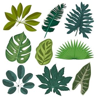 Установите реалистичные тропические листья и растения