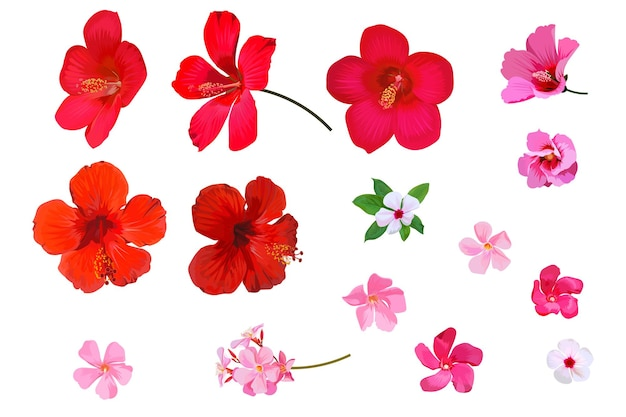 Set of red hibiscus flowers on white background