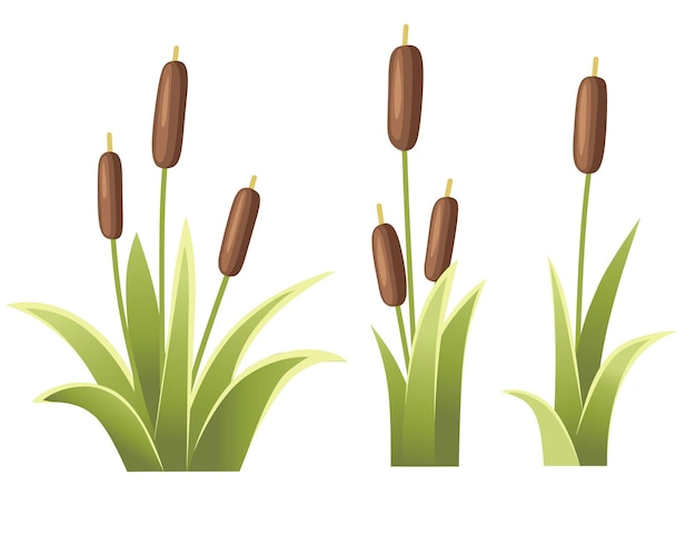 Set of reeds in green grass reed plant green swamp cane grass illustration