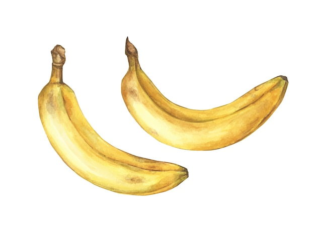 Set of ripe bananas on white background. hand drawn watercolor illustration.
