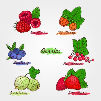 Set of ripe and cute hand drawn berries.
