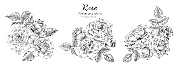 Set of rose flower drawing illustration with line art