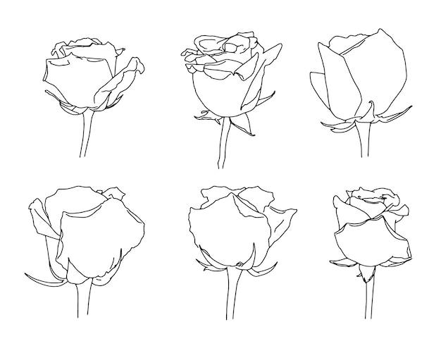 Set of rose flowers linear sketch doodle